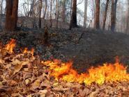 В правительстве области обсудили вопросы подготовки региона к пожароопасному сезону
