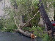 В России ожидается рост числа природных катастроф