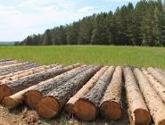 В прокуратуре обсудили состояние противодействия преступности в лесопромышленном комплексе