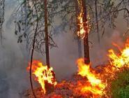 С начала сезона в Архангельской области ликвидированы 32 лесных пожара