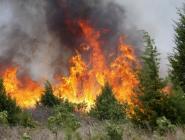 За неделю в Архангельской области произошли 44 лесных пожара