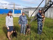 Первые щенки племенного питомника УФСИН переданы в учреждения