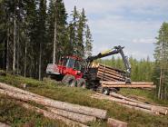 Подведены предварительные итоги реализации по «обелению» лесного бизнеса