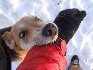 В Архангельске суд оправдал собаку, покусавшую незваного гостя