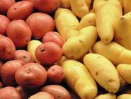 Роскачество нашло в магазинах зараженную картошку