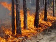 Лесники Поморья продолжают подготовку к пожароопасному сезону