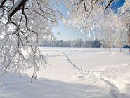 Очередная теплая зима
