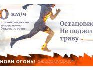 Действующих лесных пожаров в Поморье нет