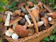 О мерах профилактики отравлений грибами