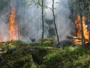 Лесные пожары в Архангельской области пошли на убыль