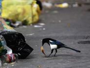 В России наведут порядок в переработке отходов