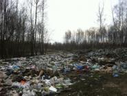 За свалки в лесу ответят муниципальные власти?