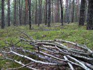 В областной закон, регламентирующий сферу лесных отношений, внесены изменения по сбору валежника