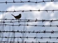 Почти две с половиной тысячи осужденных освобождены по амнистии в Поморье