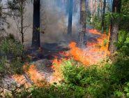 Губернатор поручил направить все силы на борьбу с лесными пожарами