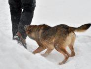С начала года от нападения животных пострадали более 353 тысяч россиян