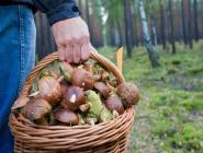 Коряжемские спасатели вывели из леса двух заблудившихся грибников