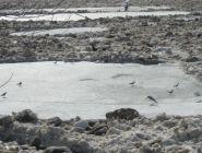 Начало ледохода на Северной Двине ожидается в первых числах апреля