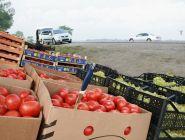 Фрукты и овощи купленные возле дороги могут быть опасны