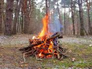 Любители пожечь костры в лесу начнут платить штрафы