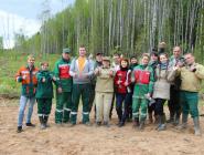 В посадке леса участвовали коряжемцы и котлашане