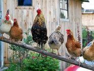 Птицы и животные попали под дачный запрет