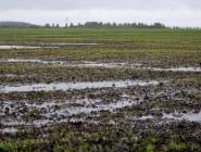 Архангельскую область освободили от наказания за неурожай